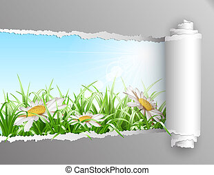 The window in the summer. Torn paper with opening showing summer background with grass and daisy flowers. Vector illustration