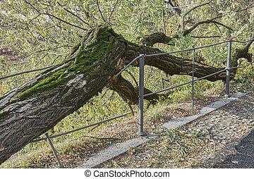 tornade, arbre, après, baissé