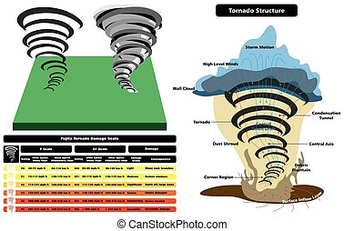 tornado, struktur, infographic, kors sektion, diagram