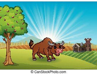 toro, attività, a, fattoria, in, il, mattina