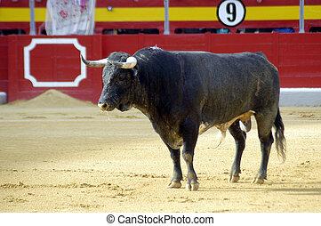 toro, en, un, bullfight, en, granada
