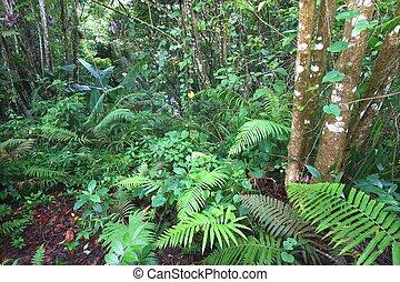 toro, -, neger, rico, rainforest, puerto