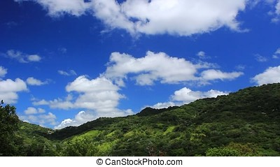 rain forest - toro negro tropical rain forest with green...