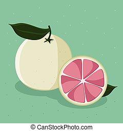 toronja rosa, ilustración