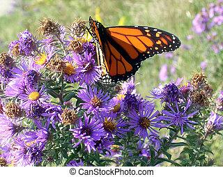 Toronto Lake butterfly 2005