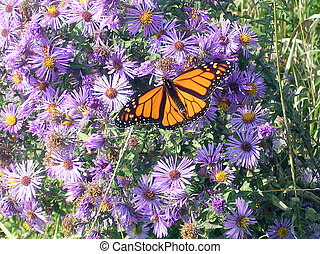 Toronto Lake Butterfly among the flowers 2005