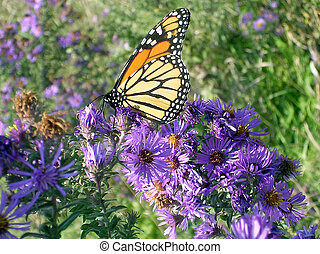 Toronto Lake Butterfly and flowers 2005
