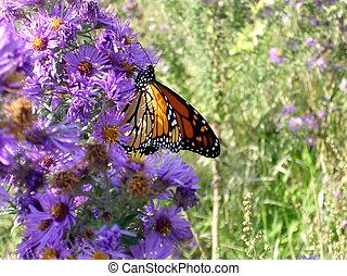 Toronto Lake butterfly September 2005
