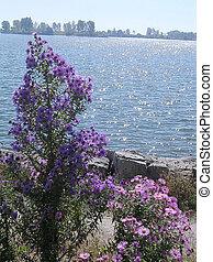 Toronto Lake Flowers 2004