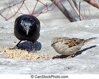 Toronto Lake grackle and sparrow 2013