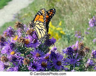 Toronto Lake Monarch butterfly 2005