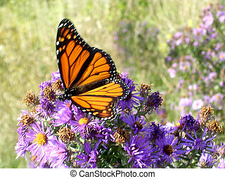 Toronto Lake Monarch butterfly October 2005