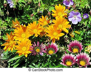 Toronto Lake orange and purple daisies