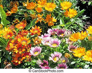 Toronto Lake the carpet of daisies 2016