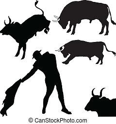 torreádor, bika