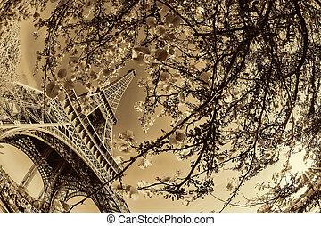 torre eiffel, con, primavera, árbol, en, parís, francia