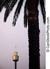 torre, sydney