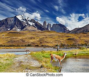 torres, チリ, paine, del, patagonia