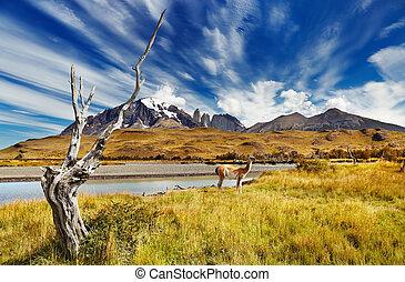 Torres del Paine, Chile - Torres del Paine National Park,...