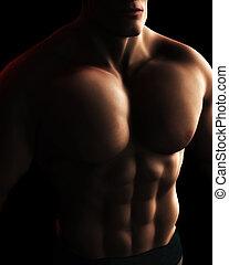 torse, numérique, corps, mâle, illustration, constructeur