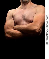 Torso budding bodybuilder - Torso of a budding bodybuilder...