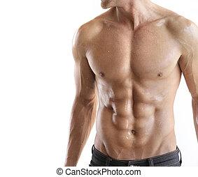 torso, dettaglio
