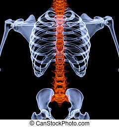 human skeleton under the X-rays. backbone is highlighted in red. isolated on black.
