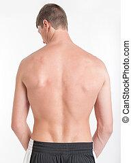torso, macho, visión trasera