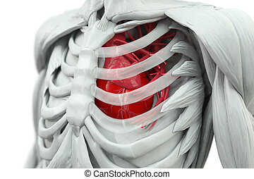 Torso with heart in red and glas rips