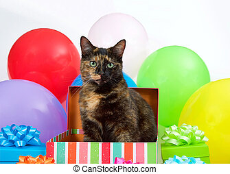 Tortie cat popping out of a birthday box