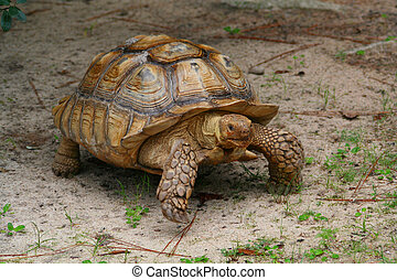 Tortoise - A photo of a tortoise.