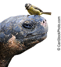 Tortoise and bird animal friends