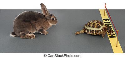 tortoise-hare
