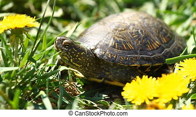 Tortoise on the Grass