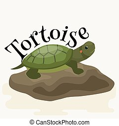 tortoise pet for home, reptile animal vector illustration