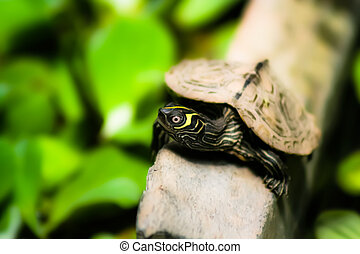 Tortoise sitting on stone