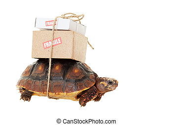 Tortoise Slow Mail - A small tortoise carrying mail on his...