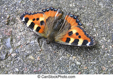 Tortoiseshell butterfly sitting on stone surface