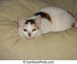 Tortoiseshell cat laying on a bean bag