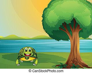 tortue, à côté de, rivière, arbre