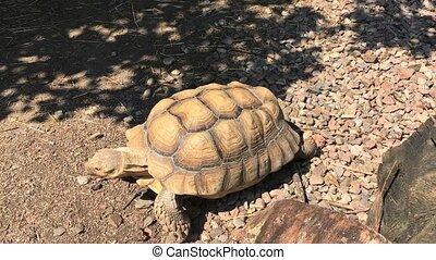 tortue, été, marche, ensoleillé, zoo, jour