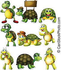 tortue, actions