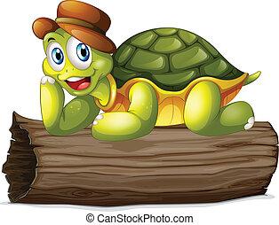 tortue, bûche, au-dessus