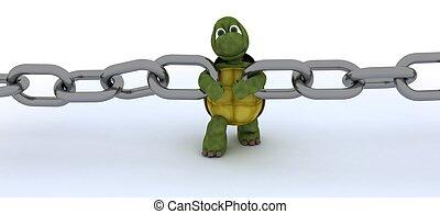tortue, chaîne