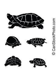 tortue, ensemble, collection
