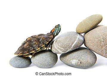 tortue, escalade marche, haut