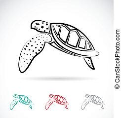 tortue, image, vecteur