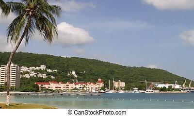 tortue, jamaïque, plage