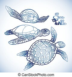 tortue mer hawksbill, collection