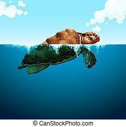 tortue, natation, océan